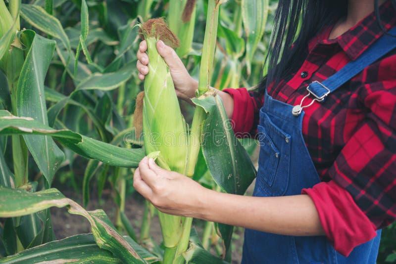 Glücklicher Landwirt auf dem Maisgebiet lizenzfreies stockfoto
