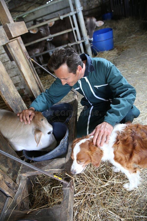 Glücklicher Landwirt mit Hund und Kuh stockfotos