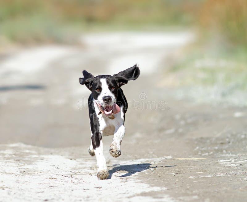Glücklicher laufender Hund lizenzfreie stockfotografie