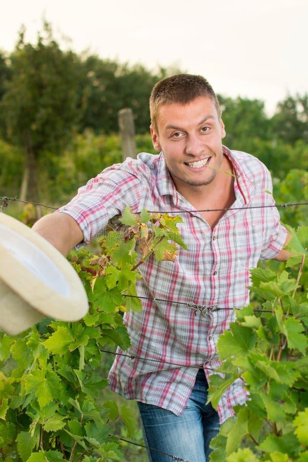 Glücklicher männlicher Landwirt am Weinberg stockfotos
