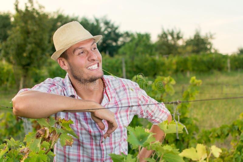 Glücklicher männlicher Landwirt am Weinberg stockfoto