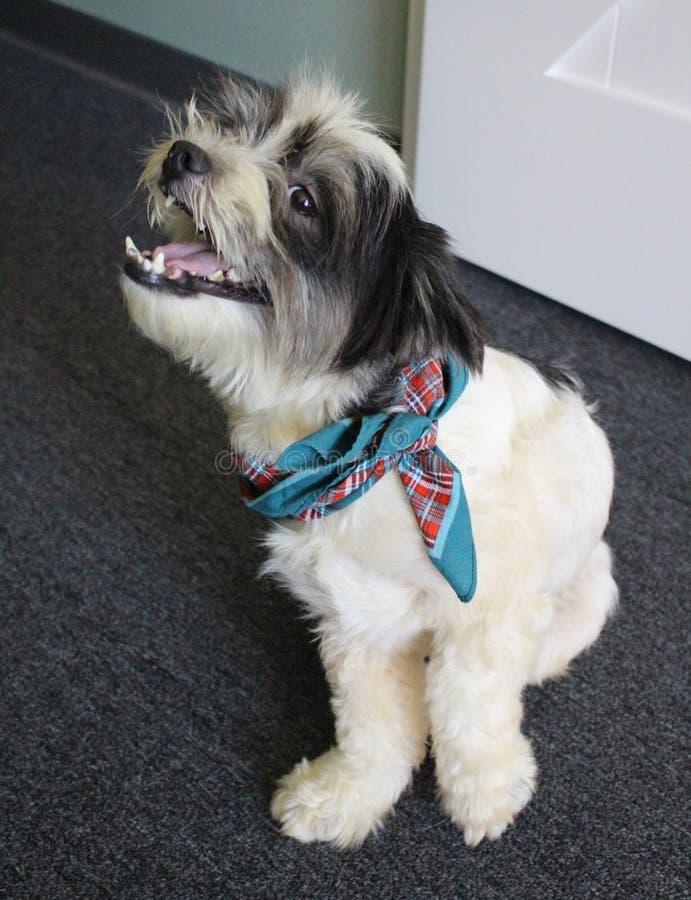 Glücklicher Rettungshund angenommen lizenzfreie stockfotos