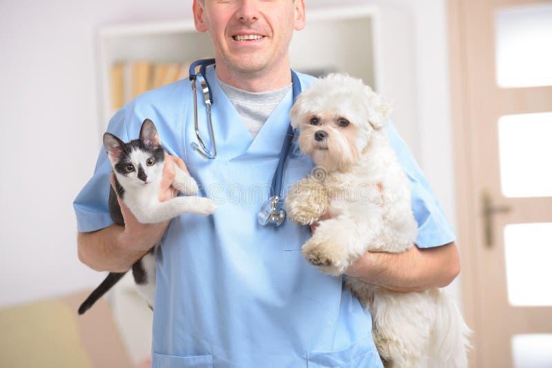Glücklicher Tierarzt mit Hund und Katze stockfotografie