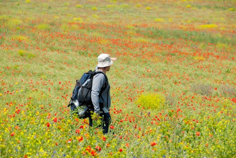 Glücklicher Wanderer auf einem Mohnblumefeld lizenzfreies stockbild