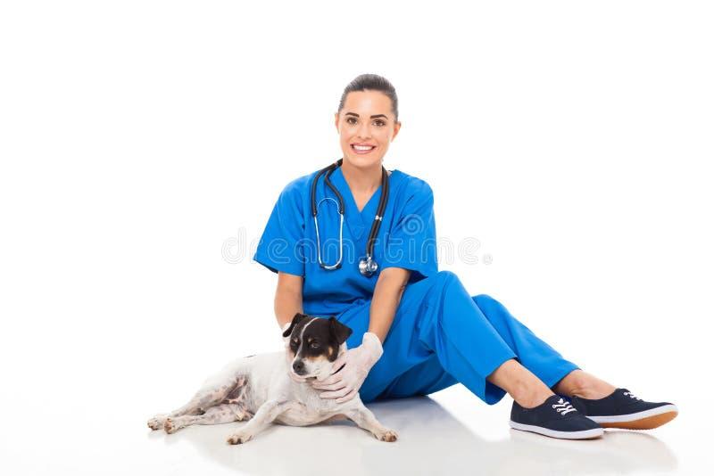 Tierärztlicher sitzender Hund lizenzfreie stockfotografie