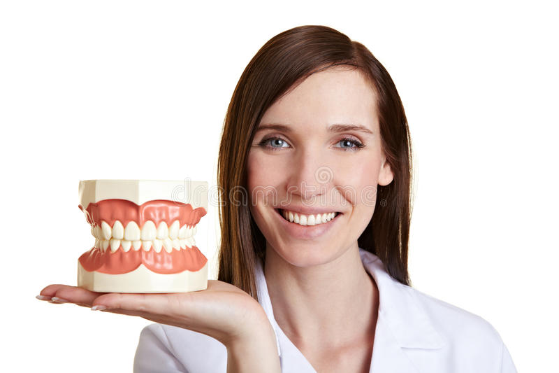 Glücklicher Zahnarzt mit Zahnbaumuster lizenzfreie stockbilder