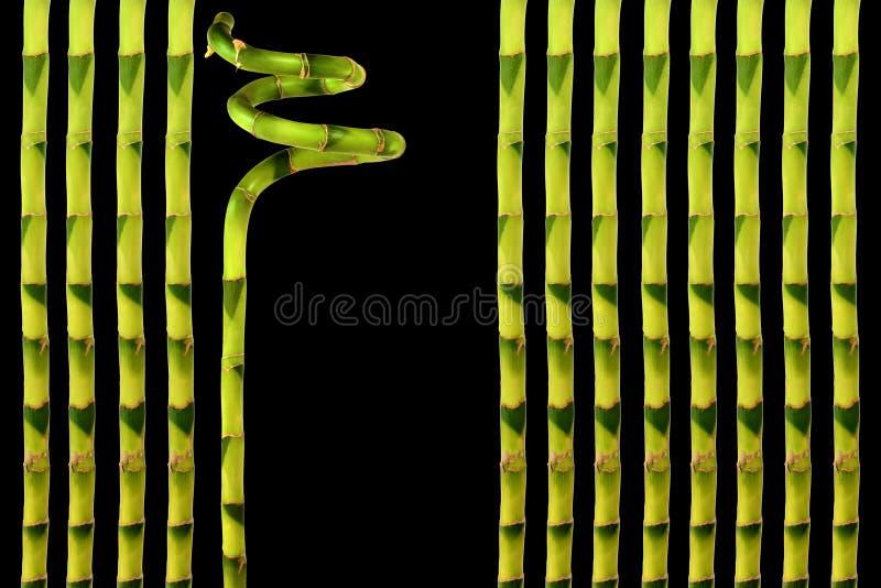 Glückliches Bambusblatt-Gras lizenzfreie stockfotografie