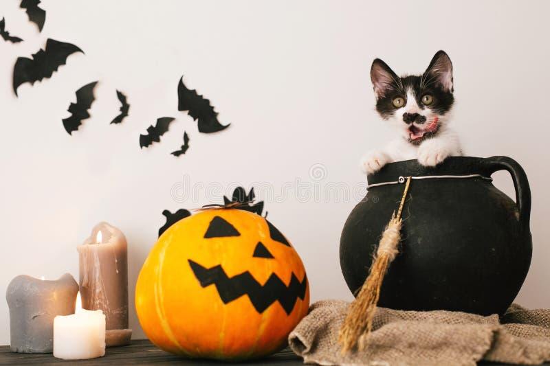 Glückliches Halloween-Konzept nette Miezekatze, die in wi des Hexengroßen kessels sitzt lizenzfreies stockfoto