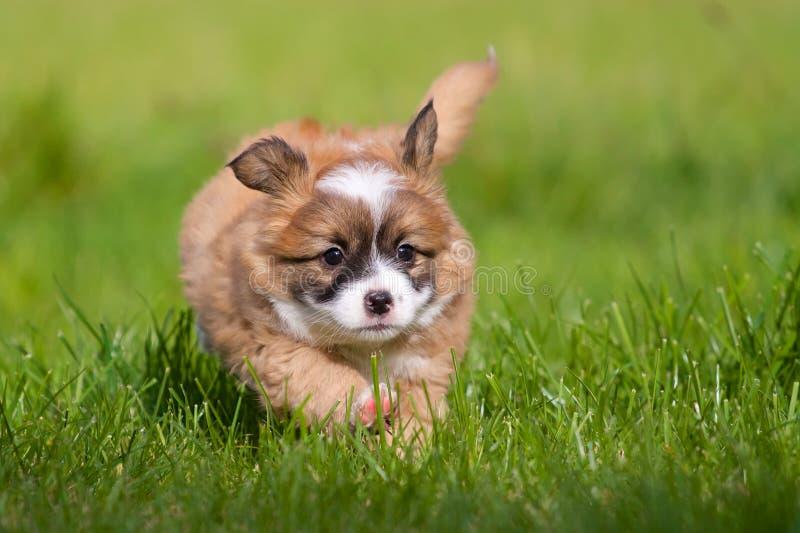 Glückliches Hundebaby lizenzfreie stockbilder