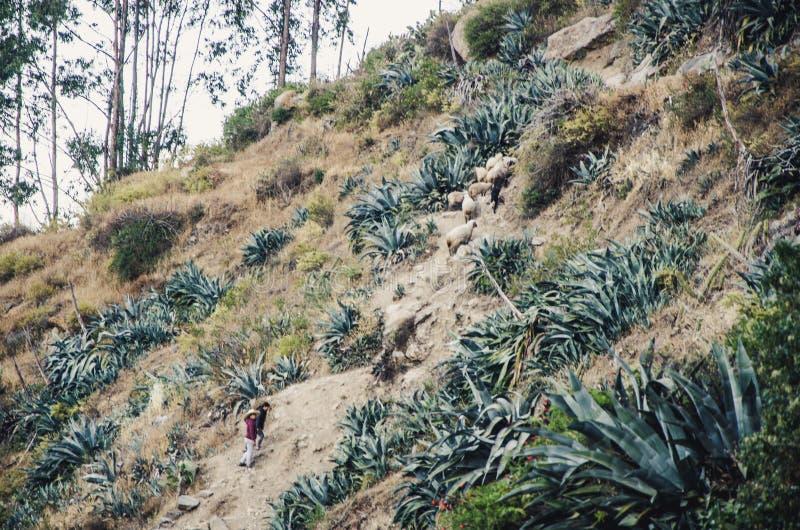 Glückliches Kind klettert einen Wicklungsgebirgspfad, der von seiner Mutter gefolgt wird lizenzfreie stockbilder