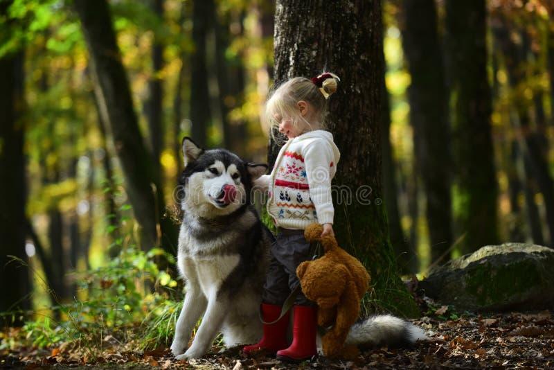 Glückliches kleines Mädchen, das mit großem Hund im Wald im Herbst spielt lizenzfreies stockfoto
