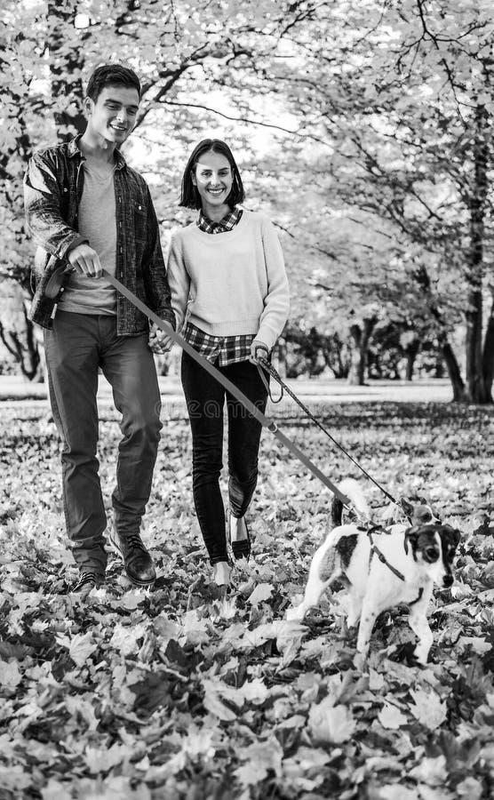 Glückliches Paar, das draußen in Herbstpark mit Hunden geht stockbild