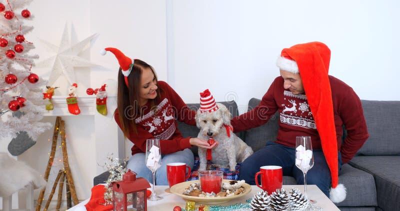 Glückliches Paar mit dem Hund, der auf dem Sofa nahe Weihnachtsbaum sitzt stockbild