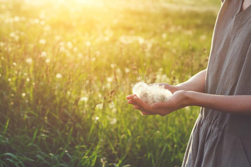 Gl?ckliches tragendes Leinenkleid der jungen Frau, das im Sonnenlicht steht, halten sch?ne L?wenzahnblumen lizenzfreies stockfoto
