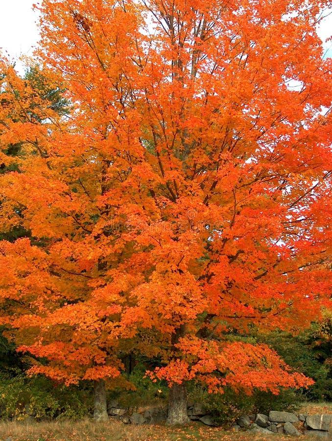 Glühender Baum lizenzfreie stockfotos