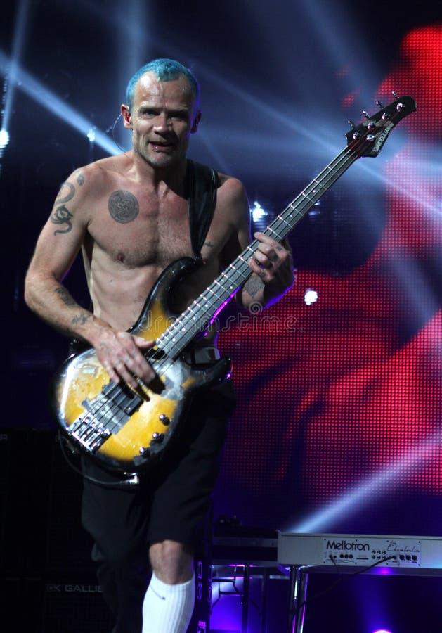 Glühender Chili Peppers im Konzert stockfotos
