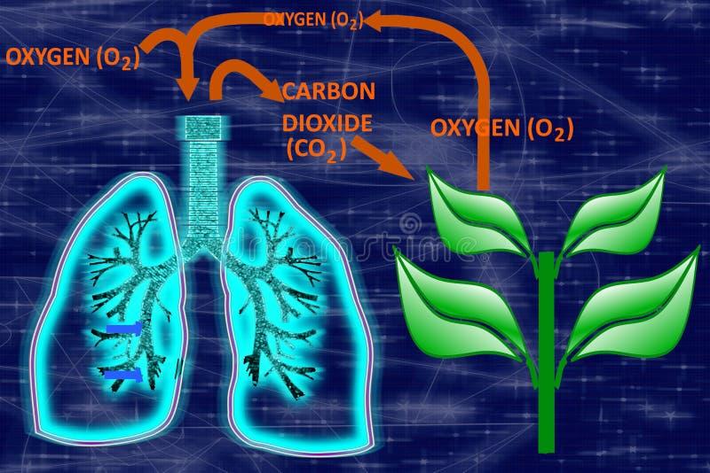 Glühender menschlicher Lunge-Sauerstoffkohlenstoff-Dioxid-Zyklus vektor abbildung