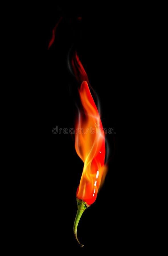 Glühender Paprikapfeffer auf schwarzem Hintergrund mit Flamme lizenzfreie stockfotos