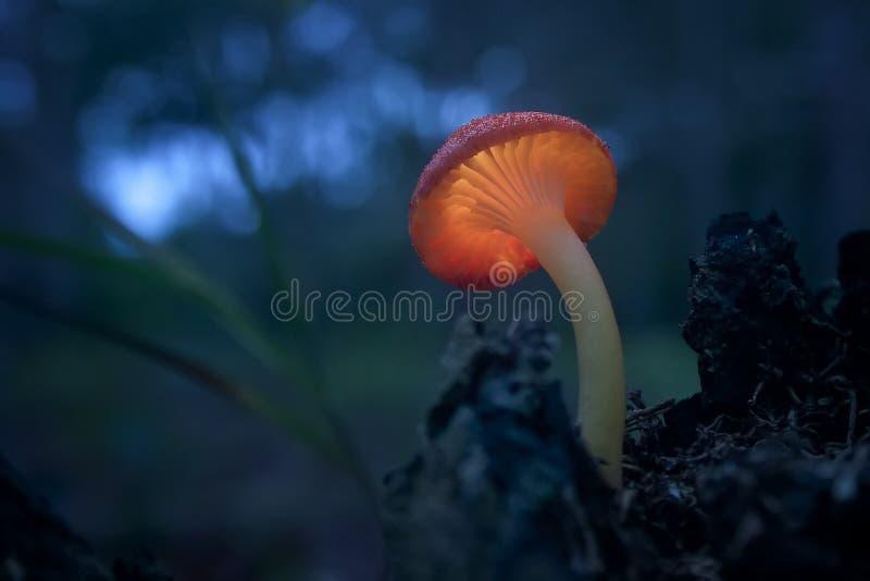 Glühender Pilz stockfotos
