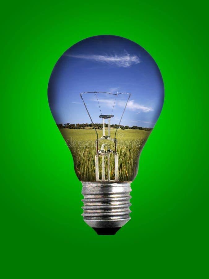 Glühlampe über grünem Hintergrund stockbilder