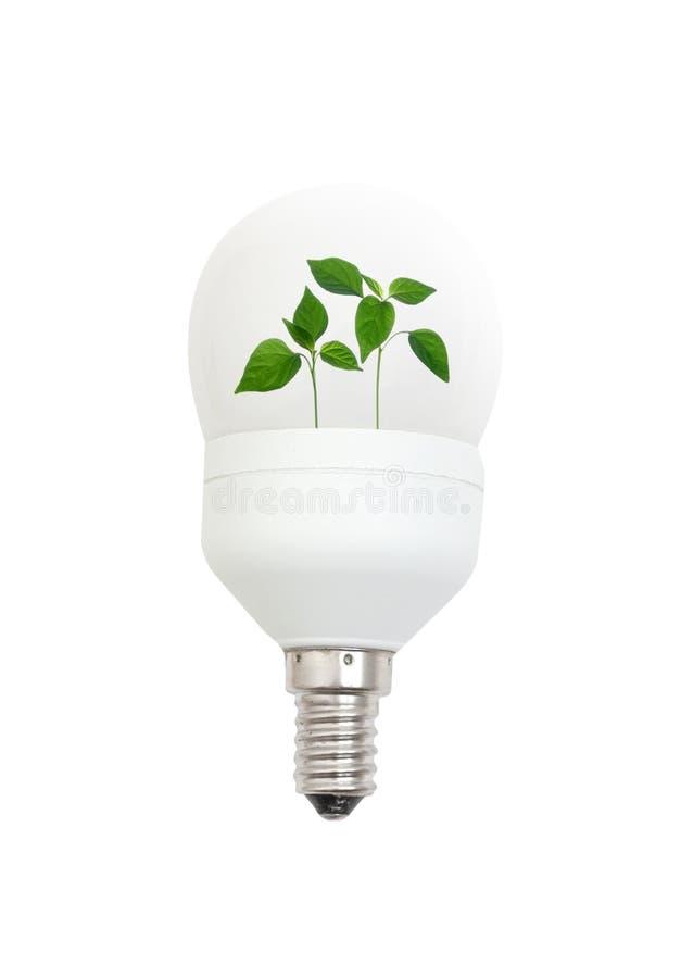 Glühlampe mit Blättern lizenzfreies stockbild