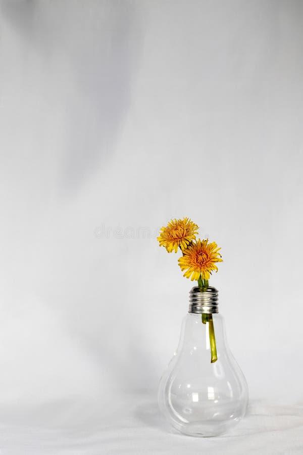 Glühlampe-Vase und Löwenzahn lizenzfreie stockbilder
