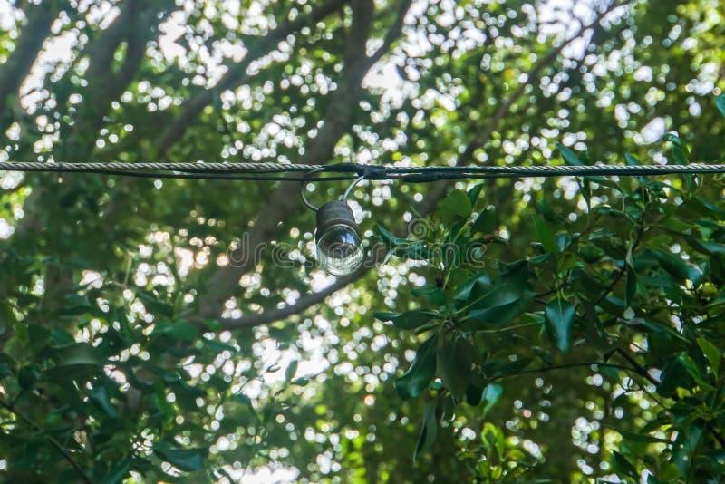 Glühlampefall der Weinlese im Hausgarten mit grünlichem Baum stockfotos