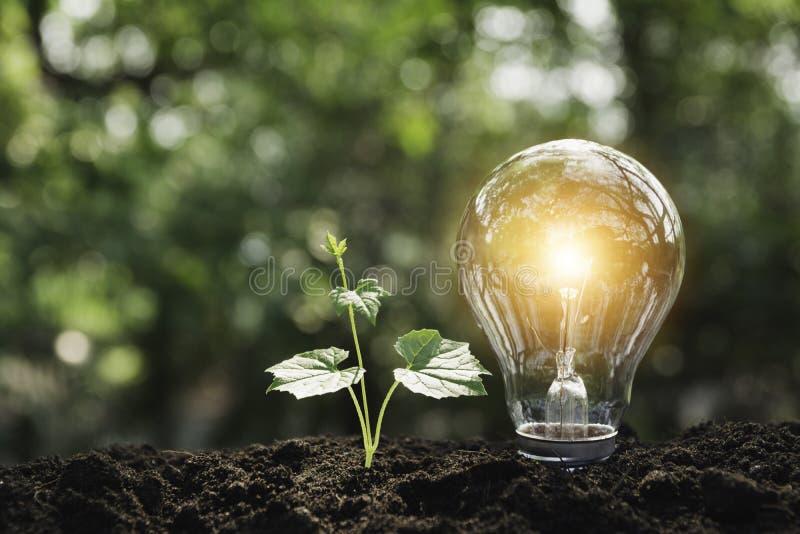Glühlampen mit das Glühen Technologie- und Kreativitätskonzept mit Glühlampen und Kopienraum für Einsatztext lizenzfreie stockfotos