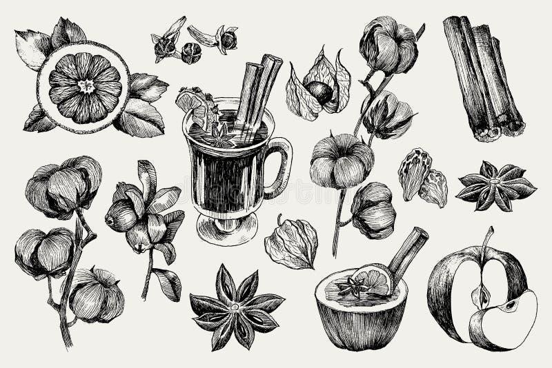 Glühwein und Gewürze, Orange, Apfel, Zimt, Gartennelke, Anis, Beere, Nelke, Baumwolle, Physalis Hand gezeichneter Vektor lizenzfreie abbildung