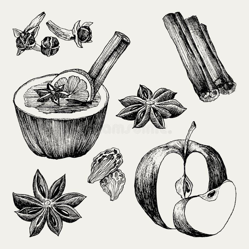 Glühwein und Gewürze, Orange, Apfel, Zimt, Gartennelke, Anis, Beere, Nelke, Physalis Hand gezeichneter Vektor vektor abbildung