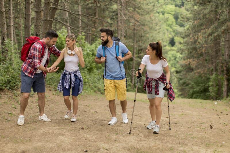 Gl?ckliche junge Gruppe, die zusammen durch den Wald wandert lizenzfreies stockbild