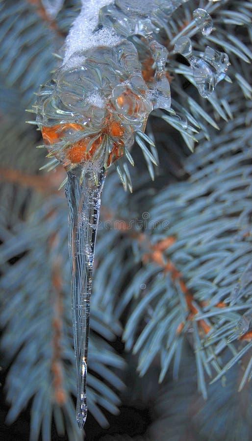 Glaçon sur la branche de pin photo libre de droits