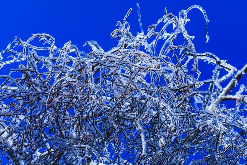 Glaçons de fonte pendant des buissons au-dessus du fond de ciel bleu Vraies pousses de glace pendant le ressort américain froid C image stock