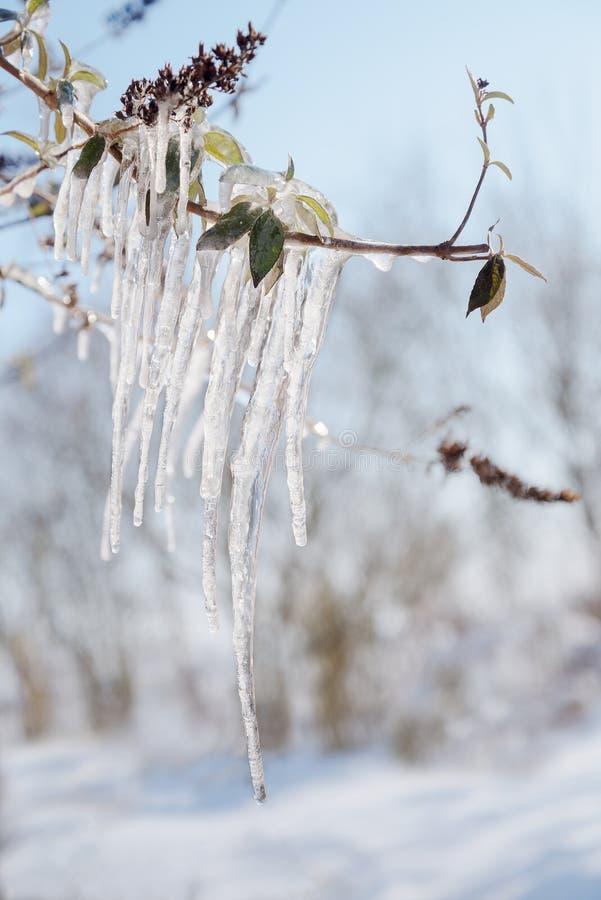 Glaçons sur une branche un jour ensoleillé d'hiver, dos trouble de paysage photographie stock