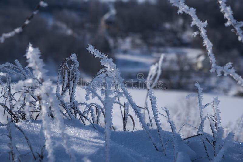 Glace d'herbe sèche recouverte d'un fond naturel flou Hoarfrost sur les branches séchées à la lumière du jour ensoleillée Fermer images stock
