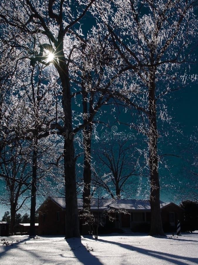 Glace dans les arbres image libre de droits