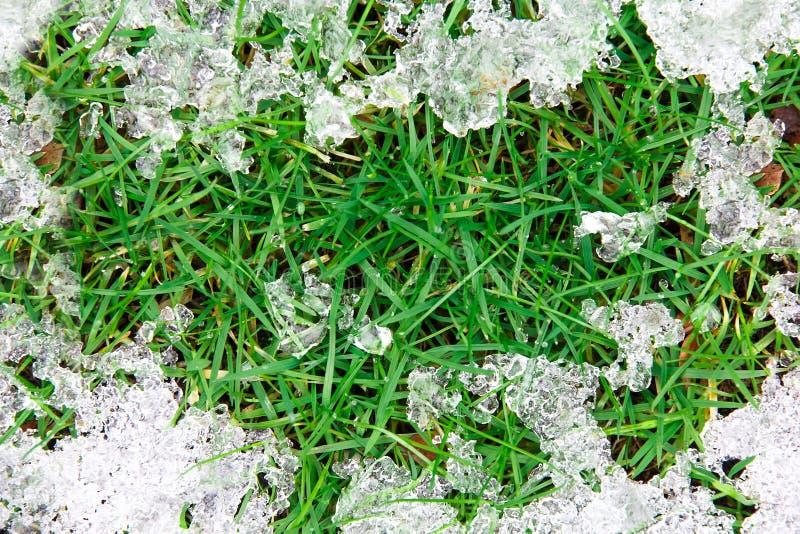 Glace de fonte sur l'herbe photo libre de droits