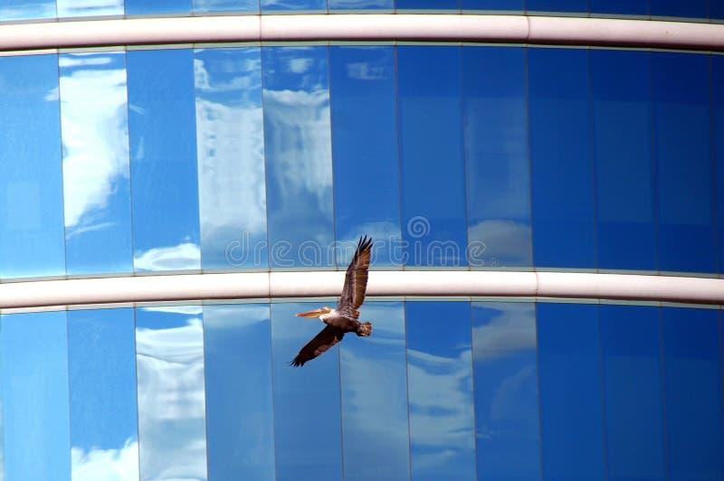 Glace et ailes photographie stock
