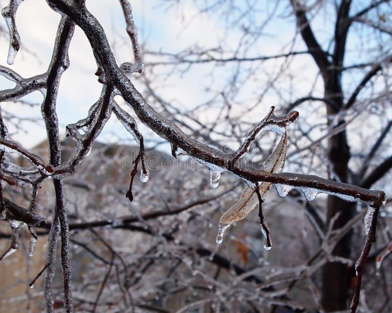 Glace sur des branchements d'arbre photographie stock