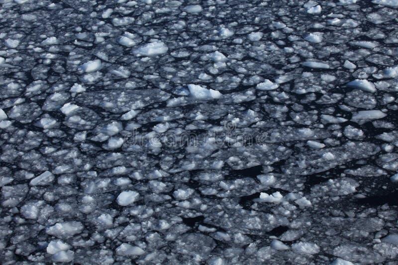 Glace sur l'eau à l'océan antarctique photos stock