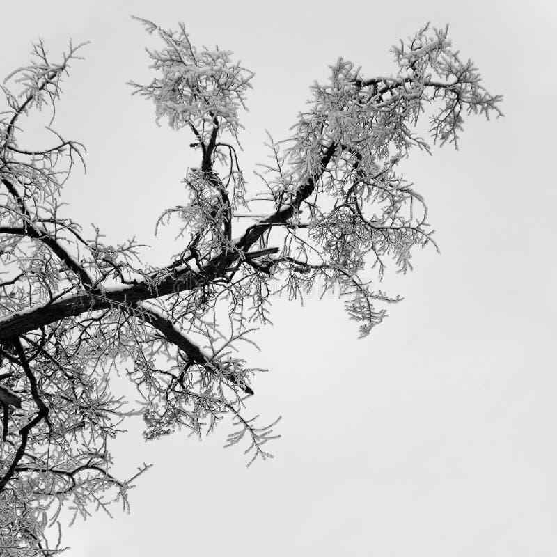 Glace sur la brindille de l'arbre images stock