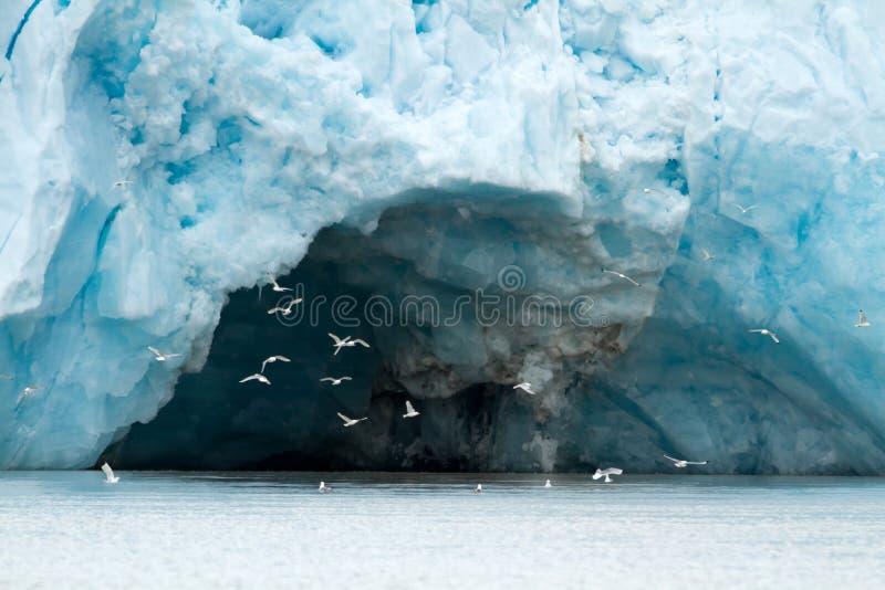 Glaciär i svalbarden royaltyfri foto