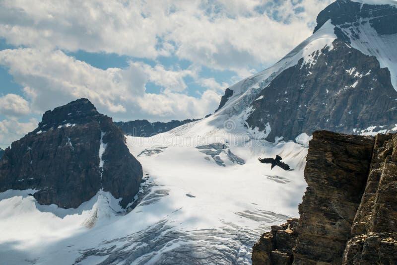 Glaciär på berget med fågeln royaltyfri bild