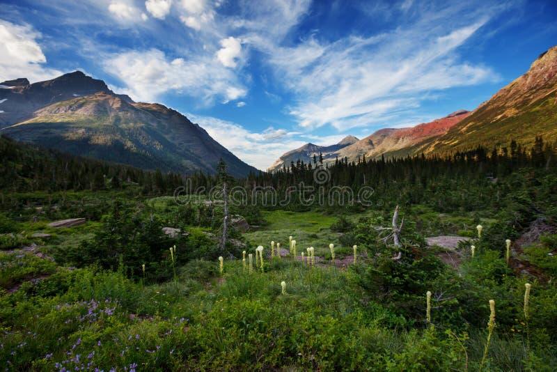 Glaciären parkerar fotografering för bildbyråer
