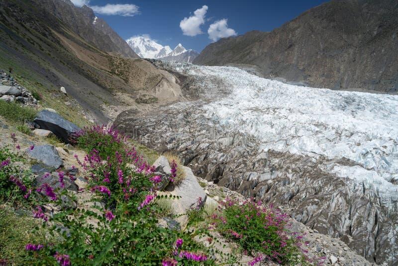 Glaciar de Passu con la flor en la estación de verano en Paquistán imagen de archivo libre de regalías