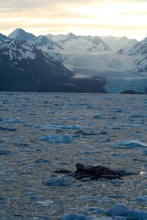 Glaciar e hielo foto de archivo libre de regalías