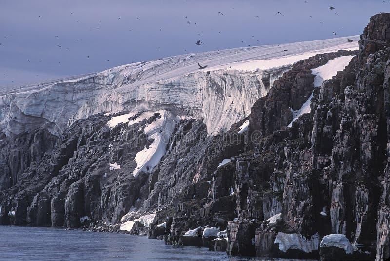 Glacier, bird cliffs and murres stock image