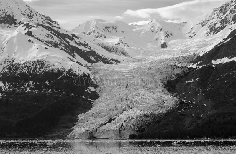 Glacier de fjord d'université images stock