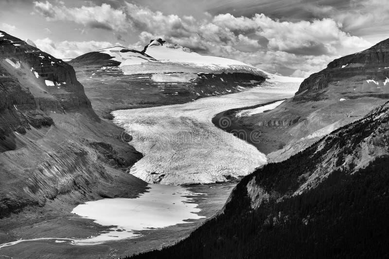Glacier de Saskatchewan photographie stock