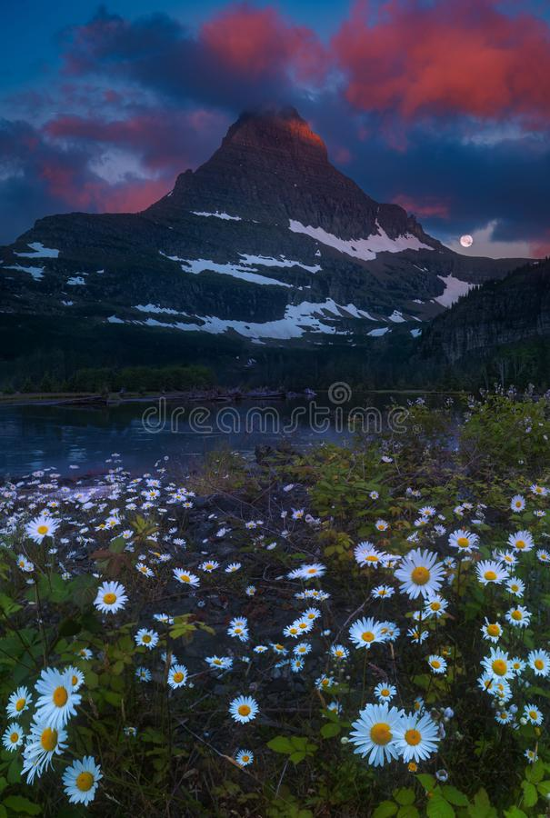 Glacier National Park at dawn. The peak of Glacier National Park illuminated by the morning sun, with moonset and wildflowers royalty free stock image